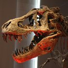Las aves prehistóricas predadoras más grandes