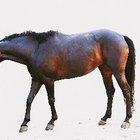 Cómo hacer afrecho remojado para los caballos