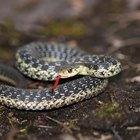 Como usar naftalina como repelentes de cobras