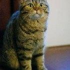 Geriatric Feline Vaccinations