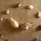 How to Glue Seashell Art on a Canvas