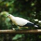 Como remover toxinas em pássaros