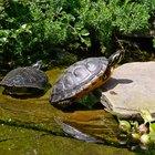 ¿Cómo puedo hacer una rampa para que las tortugas tomen sol?
