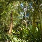 Redacción de una invitación de cumpleaños con temática de la selva