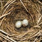 Como aves se reproduzem?