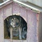 ¿Qué causa que un perro tenga moco espeso?