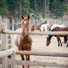 Como curar verrugas em cavalos