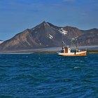 Las plantas en el Océano Ártico