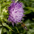Flores que abelhas não gostam