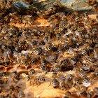Qual o melhor material para um apicultor, náilon ou algodão?