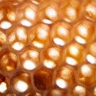 Cómo hacer un extractor de miel de abeja
