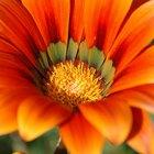 Diagrama de las partes de una flor