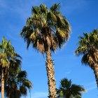 Cuáles son las partes de una palmera