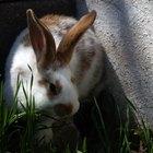 Por qué el conejo mueve las orejas
