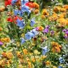 Los mejores fertilizantes para un jardín de flores