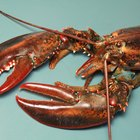 What Does the Lobster Symbolize?