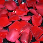 Cómo hacer una crema facial con agua de rosas y glicerina