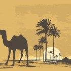 Cómo se adaptan las plantas y animales a climas calurosos