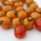 Tomato sauce in a white bowl and fresh tomatoes