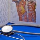 ¿Qué se encuentra del lado izquierdo de tu cuerpo en la anatomía humana?