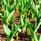 ¿Qué es el fertilizante de urea?