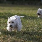 Secrets to Whitening a Dog's Coat