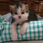 Tips for Adopting Newborn Kittens