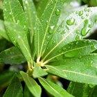 Organelos involucrados en la fotosíntesis