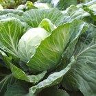 Alimentos para evitar los gases intestinales