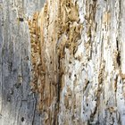How to Detect Drywood Termites