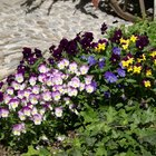 What Plants & Flowers Mean Friendship?