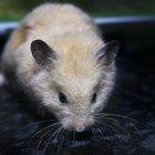 Por que a pele do meu hamster está descamando e ele está perdendo pelo?