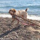 Veterinary Bulletin Board Ideas