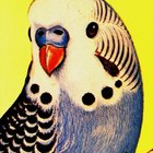 How to make budgies nesting boxes