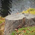 Como matar raízes de árvores