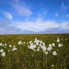 Tundra: Grupos de conservação