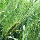 Cómo funciona el herbicida orgánico