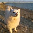 Doses de piroxicam para tratamento de câncer em cães
