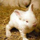 O que fazer para meu coelho beber mais água