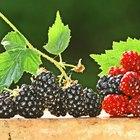 How to Identify Raspberry Plants