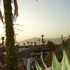 Plantas e animais nativos de Marrocos