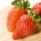 ¿Cuál es la mejor época del año para sembrar fresas?