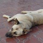 Sundowning symptoms in dogs