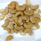List of Importers of Cashew Nuts