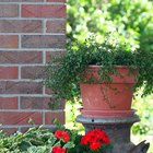Plants for a Small Flower Bed