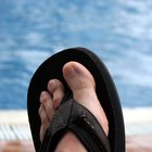What Is the Life Cycle of Tinea Pedis?