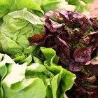 Cómo mantener la lechuga y las ensaladas frescas durante semanas