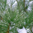 The Best Trees to Plant in Clay Soil