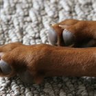 Toe Cancer in Dogs