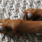 Quais as causas de patas avermelhadas em cães?
